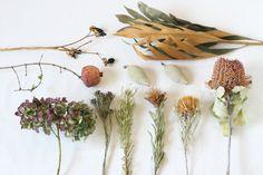 FLEURI (フルリ)  ドライフラワー dryflower グレビリア バンクシア ココシニア ドライアンドラ アジサイ リューカデンドロン