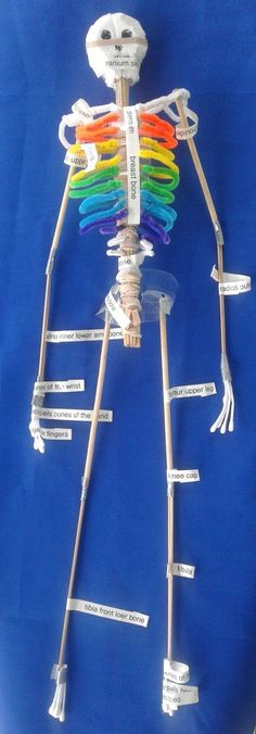 Nyla's Crafty Teaching: How to Make a Skeleton Model for School Science Projects For Kids, Stem Projects, Science Lessons, School Projects, Learn Science, Science Fair, Human Skeleton Model, Human Skeleton Anatomy, Skeleton Body