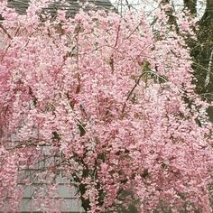 Happy Earth Day, Plainwell MI #puremichigan