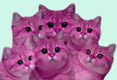 Assimilation is good. It is soft and cuddly. It is also pinkly-purple. Come closer. Pink Love, Pretty In Pink, Neon Cat, Unicorn Cat, Pink Cat, Everything Pink, Animal Paintings, Cool Cats, Cat Lady