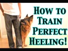 More Dog Training - CLICK THE PICTURE for Lots of Dog Care and Training Ideas. #doglovers #dogcommandstraining