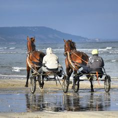 #Deauville#horses