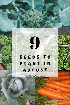 Backyard Vegetable Gardens, Veg Garden, Garden Seeds, Edible Garden, Winter Vegetables, Planting Vegetables, Winter Crops, Fall Crops, Fall Winter