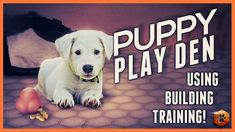 Puppy Training - The Puppy Play Den! Puppy Training Tips, Dog Training Videos, Crate Training, All Dogs, Dogs And Puppies, Pet Organization, Puppy Play, Dog Houses, Shih Tzu