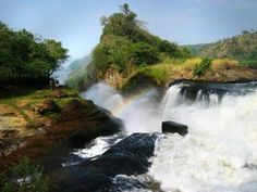 10 Days Tour To Murchison, Queen Elizabeth, Kibale, Bwindi & Lake Bunyonyi in Uganda and explore this exotic place. Get travel guides and plan your trip to Uganda. Get best offers on your Uganda Tour packages. Gorilla Trekking, World Travel Guide, Travel Guides, Travel Tips, Wildlife Safari, Victoria Falls, Day Tours, Plan Your Trip, Branches