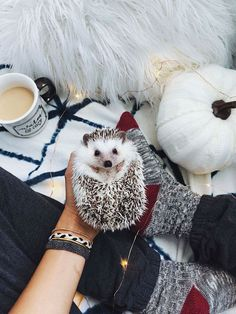 22 Ideas Baby Animals And Their Mothers Nests B 22 Ideen Tierbabys und ihre Mütternester B Pygmy Hedgehog, Baby Hedgehog, Animals And Pets, Funny Animals, Cute Little Animals, My Animal, Animal Memes, Animals Beautiful, Animal Pictures