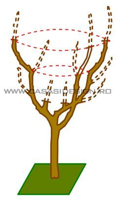Grădină b tourism studies - Tourism Pruning Fruit Trees, Tree Pruning, Bonsai Tree Care, Bonsai Art, Vertical Garden Diy, Tower Garden, Growing Plants, Topiary, Garden Planning