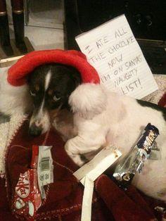"""I ate all the chocolate, now I'm on Santa's naughty list."" ~ Dog shaming"