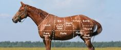 """Horses will be bred specifically for slaughter and genetic engineering and cloning will likely be utilized...and how does this help decrease the # of """"unwanted horses"""" again?  I can't believe how some horse people believe the pro-slaughter propaganda without doing any research...and we're riding unicorns?  ha!"""
