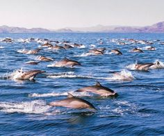 If you love dolphins, how about this as a backdrop for your wedding at CostaBaja, Mexico