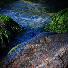 Strand sten tang og vand på Helnæs  #visitfyn #fyn #nature #visitdenmark #naturelovers #nofilter #natur #denmark #danmark #dänemark #landscape #nofilter #assens #mitassens #vildmedfyn #fynerfin #vielskernaturen #sea #beach #seaweed #ocean #instapic #picoftheday #sommer #september #beautiful