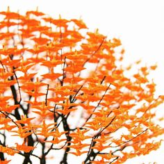 Japanese artist Naoki Onogawa is taking origami art to the next level, and she's doing it in the most Japanese way ever. Oragami, Origami Paper, Origami Cranes, Wire Trees, Japanese Artists, Tree Art, Flower Crafts, Creative Inspiration, Paper Art