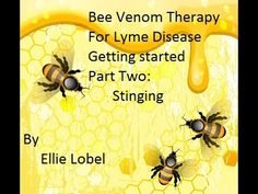 Bee Venom Therapy For Lyme Disease Gettting started Part Two Stinging