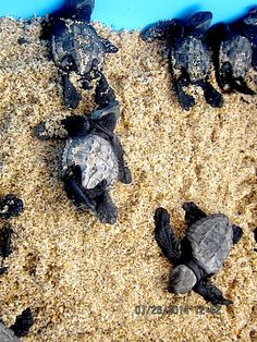 Read about our trip to Mexico and where we met these adorable turtles! www.enchantedseashells.com