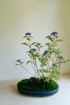 bonsai / kokedama. This site has a lot more flower type bonsais.
