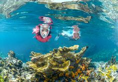 Sigue descubriendo del fondo marino con el tubo de la máscara de snorkeling Easybreath de Subea. #Swim #Deporte #Decathlon Snorkeling, Painting, Portugal, Swim, Scuba Gear, Goal Body, Star, Sport, Salud