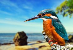 46 Beakalicious Bird Photos! by GuruShots