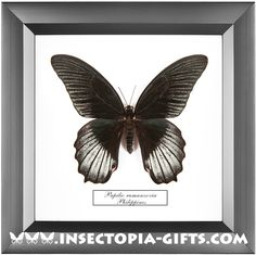 Framed butterflies, beetles and other insects.Decor, design, stylinghandmade, idea, art, gift.