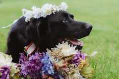 A Maid of Honor Carried the Bride's Dying Dog Down the Aisle at Her Wedding