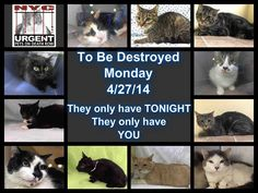 NYC TO BE DESTROYED Monday April 28'14 **** ELEVEN CATS!!!!!!  RESCUE A DEATH ROW CAT:: Go to the ACC website  https://www.facebook.com/nycurgentcats?ref=br_tf#!/media/set/?set=a.781339078550748.1073742285.220724831278845&type=3