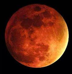 Blood moon. 4/15/2014. Photo by John Troutman.  Ft.myers, Florida