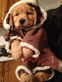 get that jacket off that puppy before I EAT HIM UP!! So stinking cute
