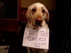 21 Labs Dominate Dogshaming With Massive Amounts of Derp