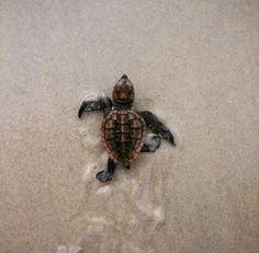 ✿ I love turtles