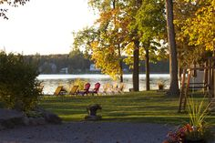 Birch Bend Cottage Resort in the fall, late afternoon. Birch, Cottage, Fall, Painting, Autumn, Casa De Campo, Painting Art, Paintings, Cabin