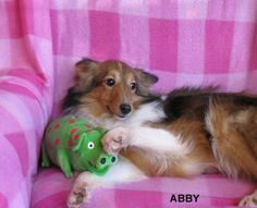 Abby with her Piggy