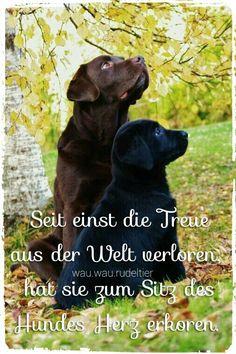 Seit einst die Treue aus der Welt verloren,  hat sie zum Sitz des Hundes Herz erkoren.