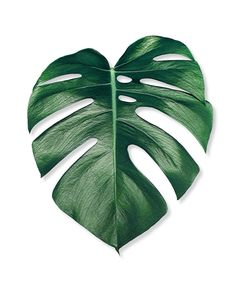 Monstera Leaf Art Print by Nordik - X-Small Monstera Deliciosa, Monstera Leaves, Leaf Prints, Art Prints, Doodle Drawing, Plant Painting, Painting Art, Leaf Art, Tropical Leaves