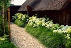 love the grass in front of the hydrangea bushes