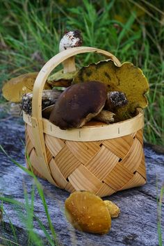Finnish woods are now full of mushrooms, free & delicious