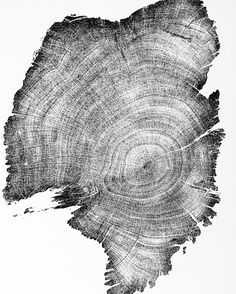 Nearly 900 Year Old Cedar La Anciana Tree Ring Art by LintonArt. This tree was over 300 years old when Columbus reached the Americas. #lintonart #treeringprint #treeringart #oldtrees #treelovers #woodlovers #Neverstopgrowing #mountainlove