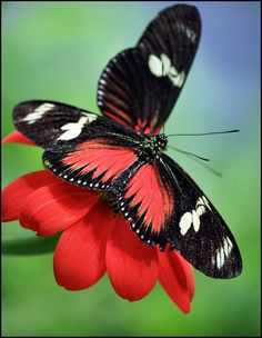 take when the season was right; there were butterfly kisses to give and night-time prayers; there were butterfly kisses and a good night