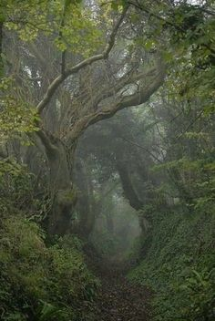 Mystical Forest, Forest Fairy, Forest Grove, Foggy Forest, Forest Trail, Misty Forest, Forest Path, Magic Forest, Deep Forest