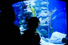 A visit to the National Zoo and Aquarium in Canberra is a must! | VisitCanberra, via Flickr