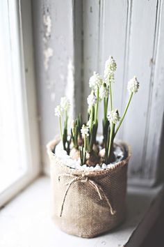 60 pretty windowsill decoration ideas for Easter that you can easily replicate- … - Deko Love Flowers, Diy Flowers, Spring Flowers, White Flowers, Flower Pots, Beautiful Flowers, Seasonal Flowers, Spring Blooms, Windowsill Decoration