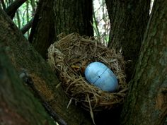 Nest #geocache.  This would be easy to make this time of year since plastic eggs are in the Dollar Store for Easter, and you may be able to find fake nests too. Kinder egg