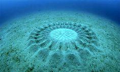 Mysterieuze onderwatercirkels -  Vrouwtjesvissen van een soort kogelvis maken de cirkels om mannetjes aan te trekken. In het midden van de cirkel leggen ze hun eitjes. De hoopjes zand dienen als beschermende buffer tegen oceaanstromingen. Hoe meer zandhoopjes dus, hoe meer kans dat de eitjes blijven liggen.    Dat weten de mannetjes. Daarom geldt ook dat een vrouwtjes sneller een mannetje vinden als ze een grotere cirkel maken.