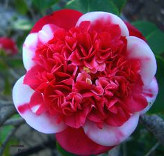beautiful rare flowers images - Google Search