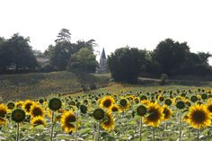Sunflowers and spires.