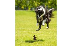 39 Perfectly Timed Photos Of Man's Best Friend That Are Doggone Funny (Slide #24) - Pawsome