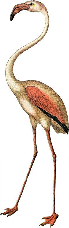 Free Flamingo Clip Art