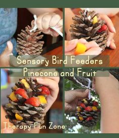 A fun way to incorporate different sensory experiences, including food experiences, is to make pine cone bird feeders.