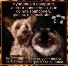 SUEÑOS DE AMOR Y MAGIA: Di No al Abandono y Maltrato Animal.