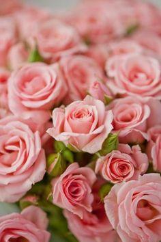 Roses...Remember