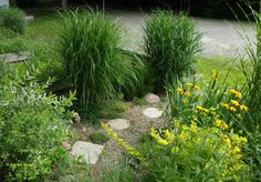 Gravel path planting of shrubs, grasses and other perennials
