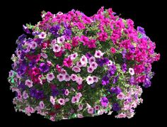 Springtime In Southern Oregon Means Hanging Baskets Lining The Streets Where Do Those Beautiful Come From Four Seasons Nursery